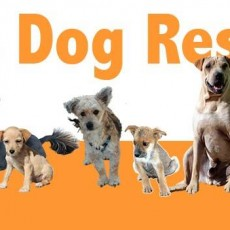 barbs-dogs-rescue.jpg